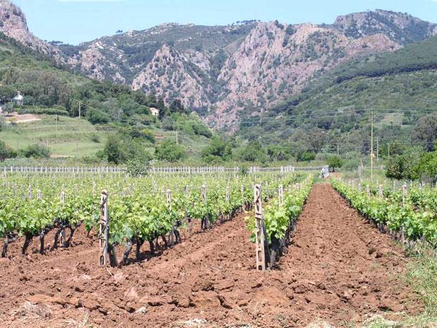 Vino Isola d'Elba